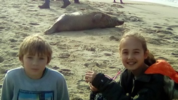 zeehond met Diaz en Jayco